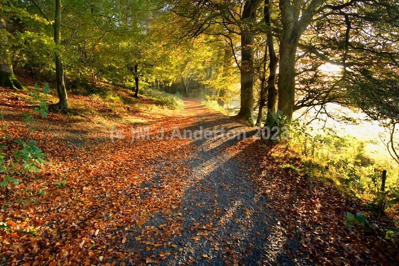 Glending Wood Sunrise