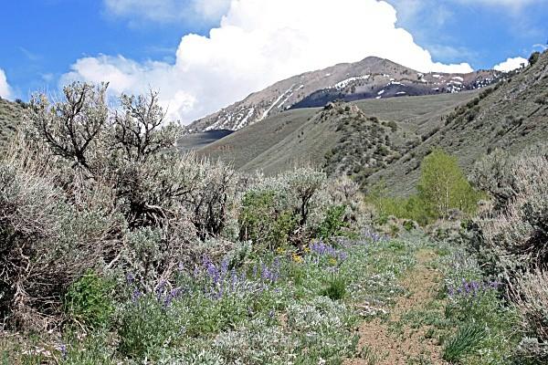Cottonwood Creek - Nevada (mostly) Landscapes