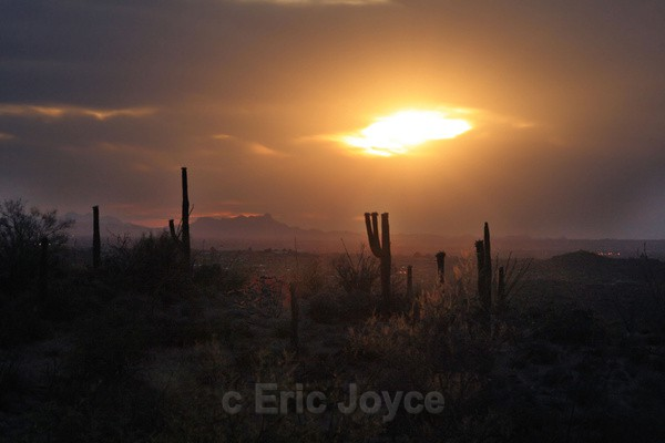 Saguaro National Sunset - Tuscon, Arizona
