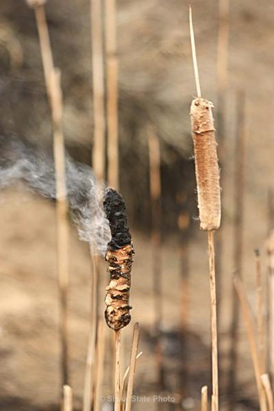 Smoking Cattail - Fallon/Churchill Fire Department