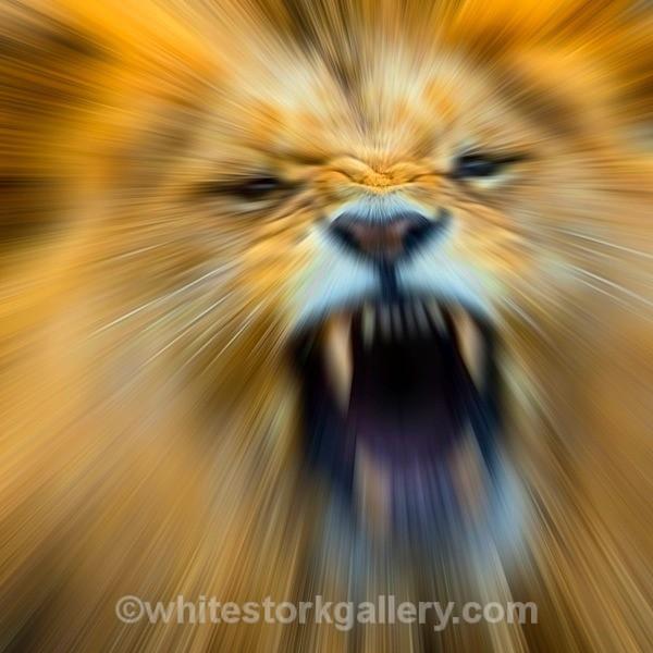 Lion - Wildlife and Animals: Art