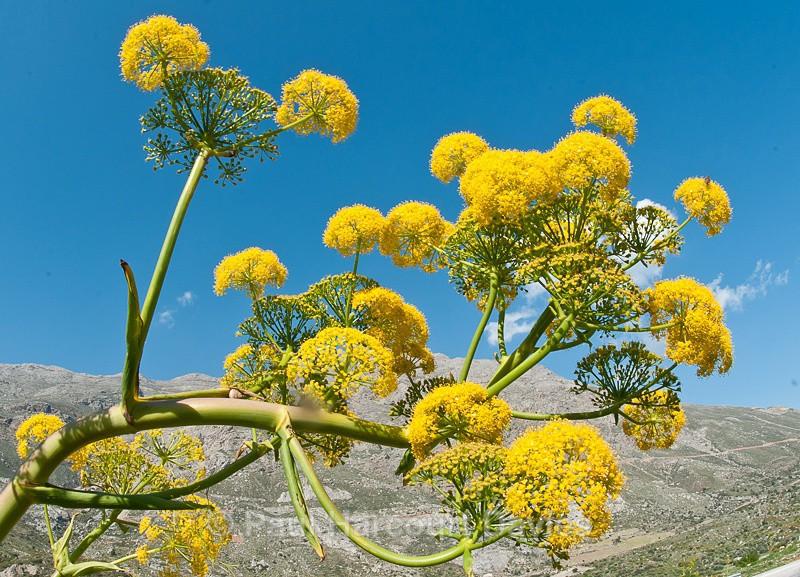 - Plants: wide-angle