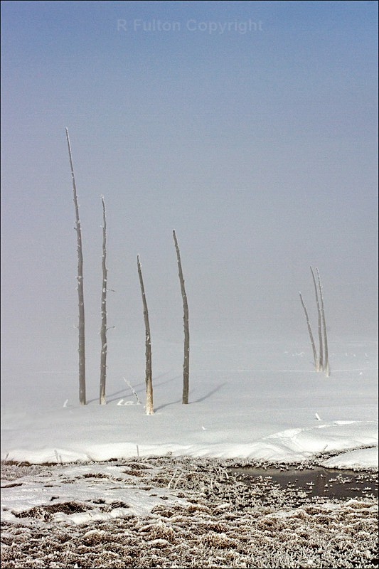 Dead Trees - Yellowstone - Yellowstone