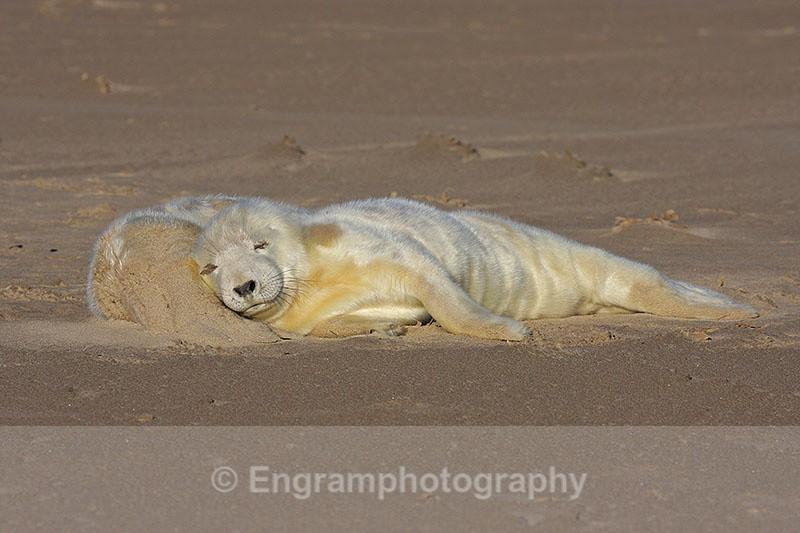 Sleepyhead - Seals