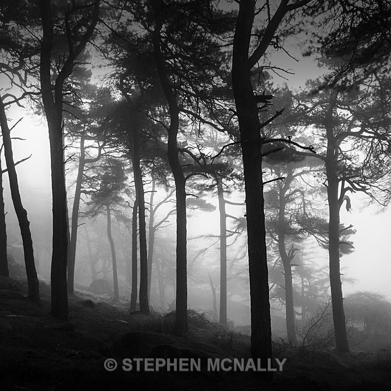 Trees in Fog - Landscapes