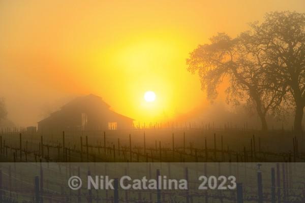 Spring Vineyard Sunrise - Landscapes