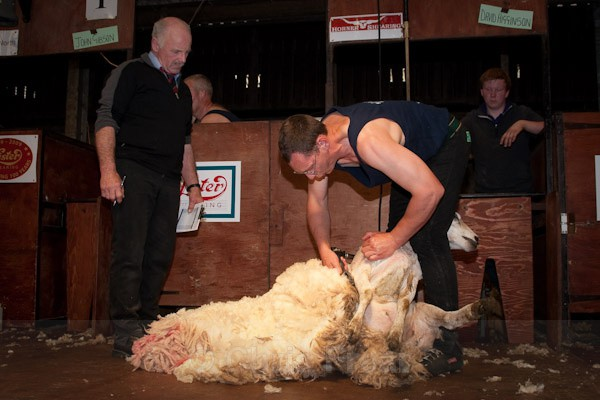 1 - Shearing Competition
