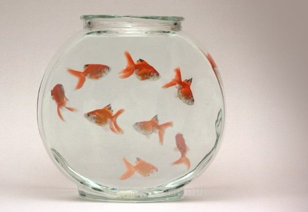 Assignment 3 - The Goldfish - 2006 Finalist in Popular Photography's Photographer of the Year