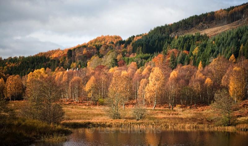 Tummel trees - Perthshire