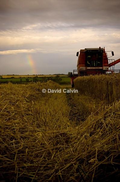 Hay Harvest - Rural