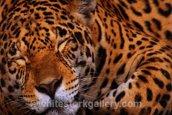 Dreamer - Wildlife and Animals