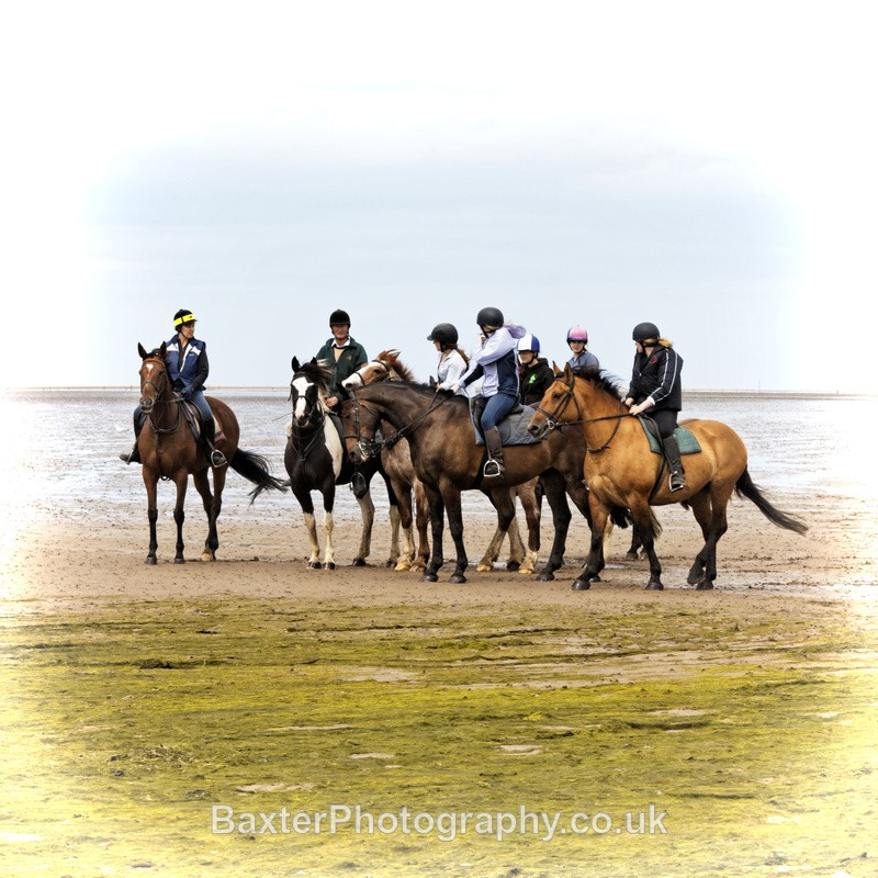 Horses On The Causeway (Square) - Northumberland