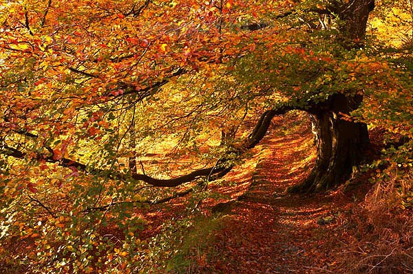 Autumnal Archway - The Lakes