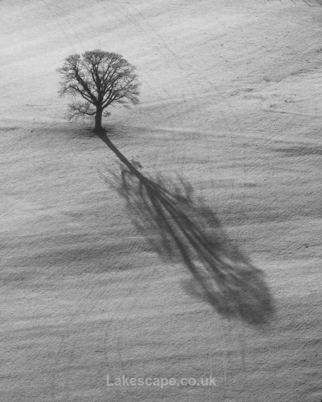 Alone - Trees