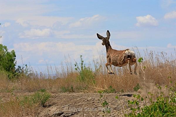 Mule Deer Doe - 'Wildlife' (Big & Small)