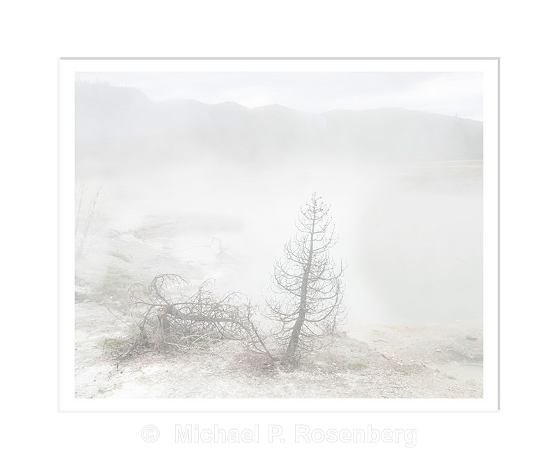 SteamedTrees, Yellowstone National Park, WY - Yellowstone and Grand Tetons
