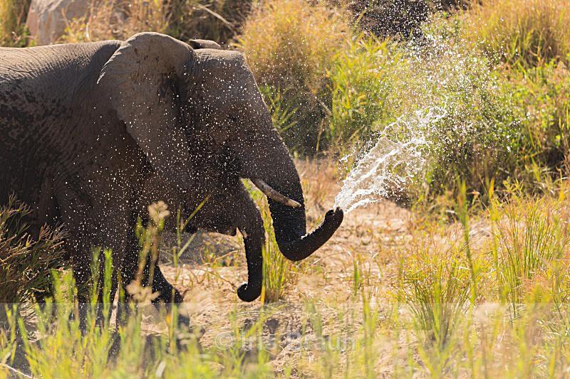 Le pompier - Elephant
