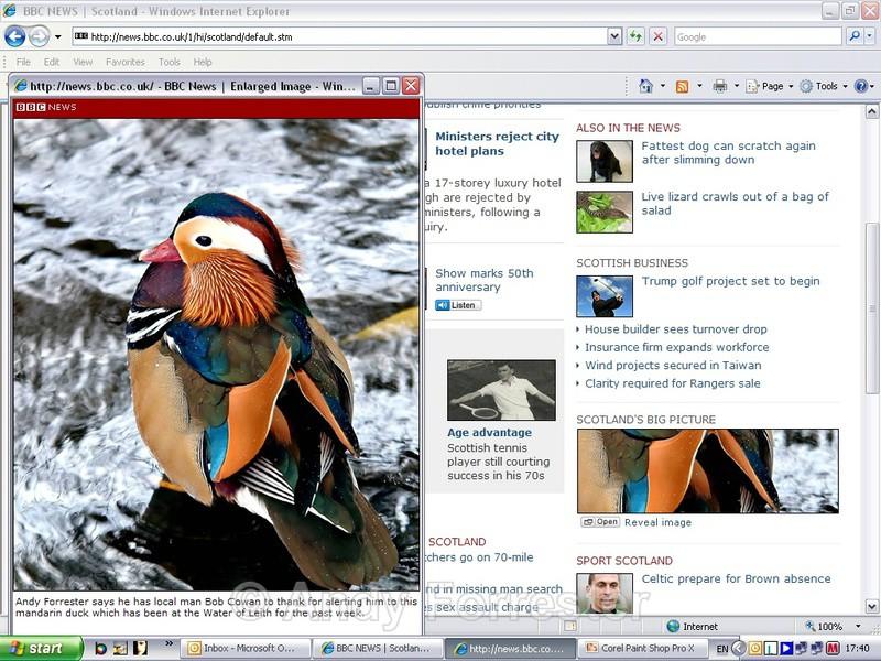 BBC Big Picture - Birds