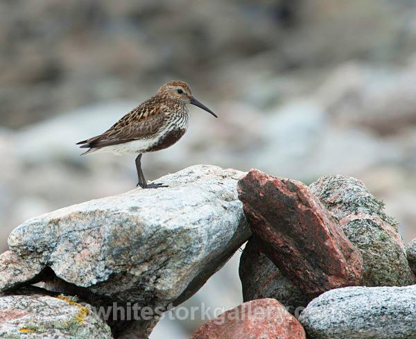 Balranald Bird Resrve, Uist - Scottish Highlands