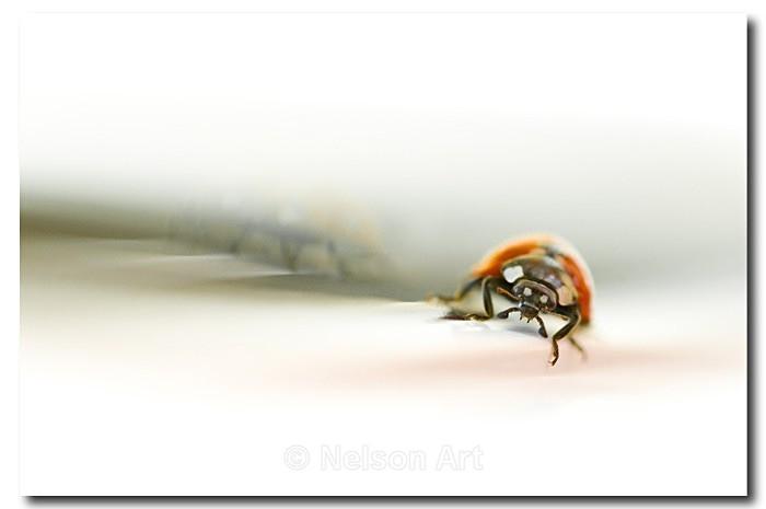 Ladybird - Nature