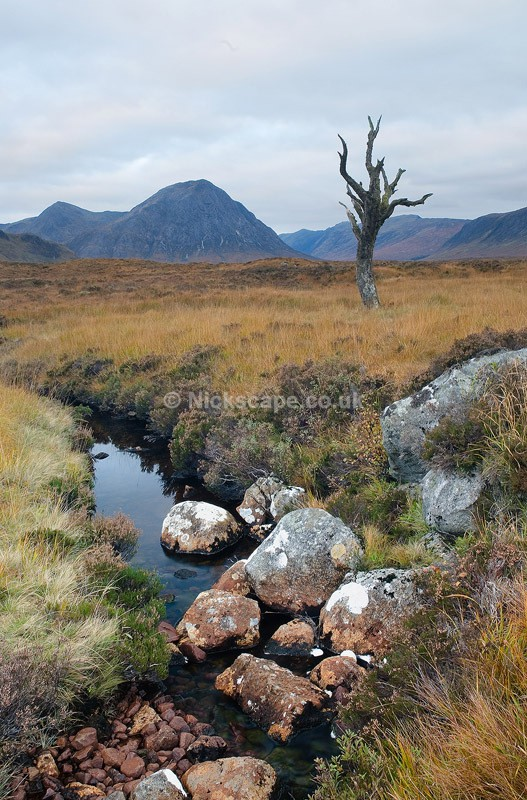 Scotland14 - Glencoe Tree - Scotland
