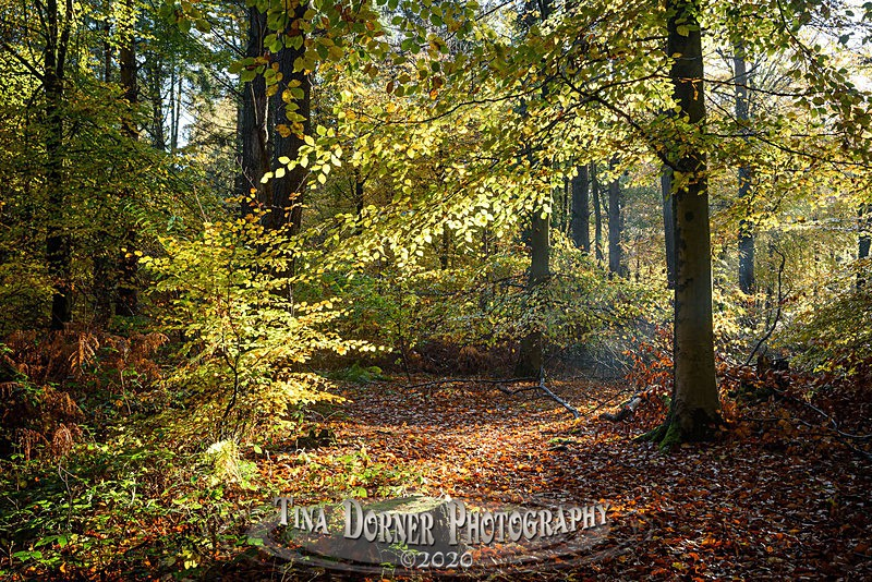 Autumn Glade - Autumn in The Forest of Dean & Wye Valley