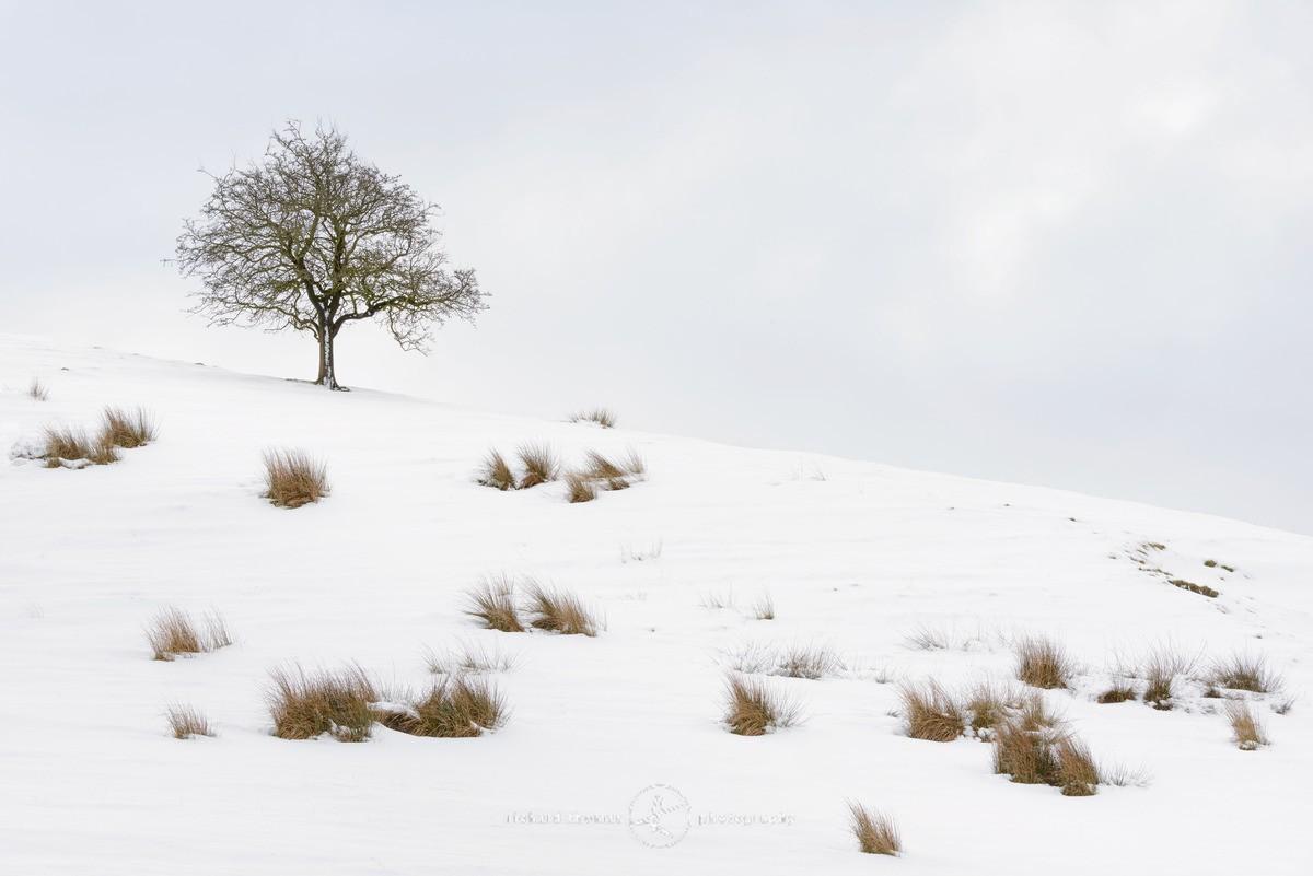 Tuft tree hill - WINTER