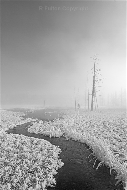 Mist  Trees Mono - Yellowstone