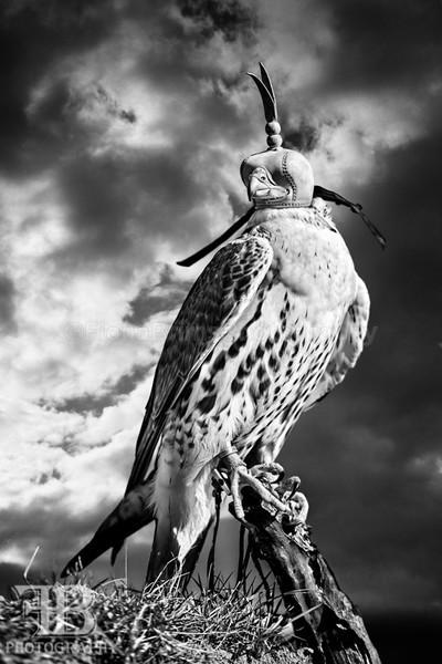 wow march 16 Photo day-15 - Birds of Prey