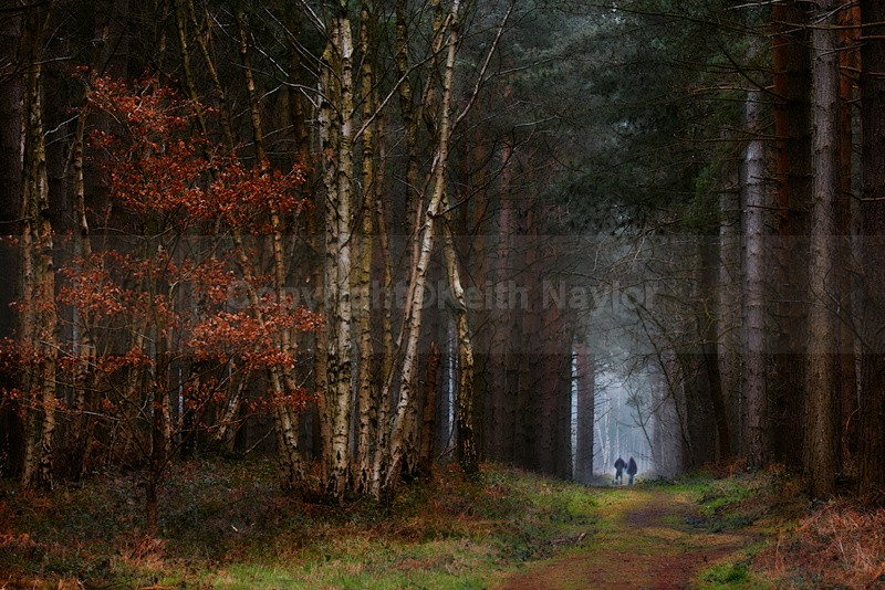 Sherwood Pines - Latest Work