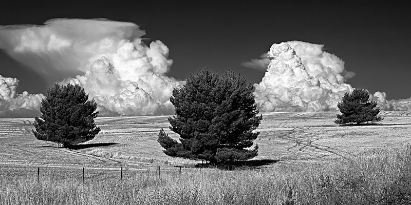 Three Trees and Two Storm Clouds converted to Black & White.