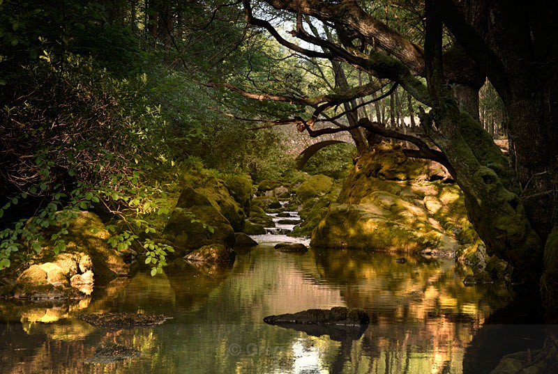 Golden Light of Dawn - Tollymore Forest Park