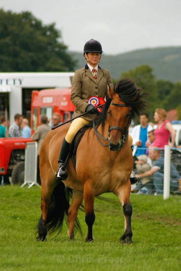 13 - Equestrian Photography