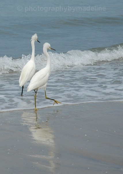 Two Stepping - Birds