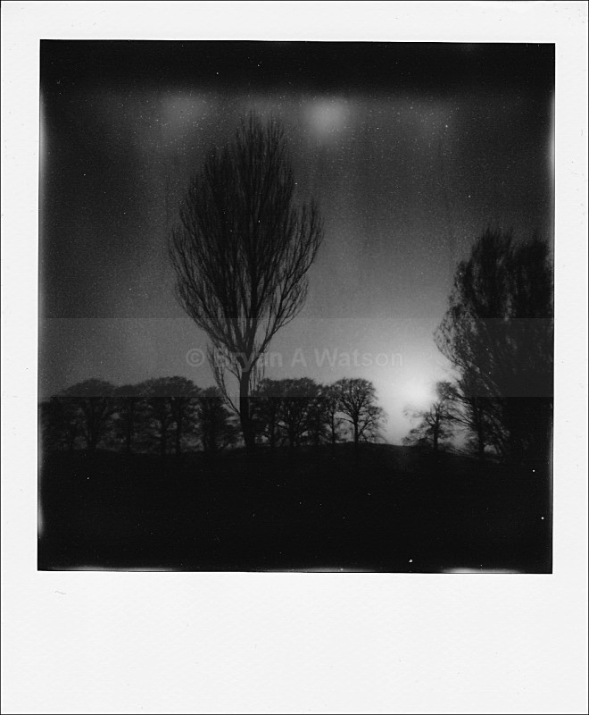 Tree - Polaroid
