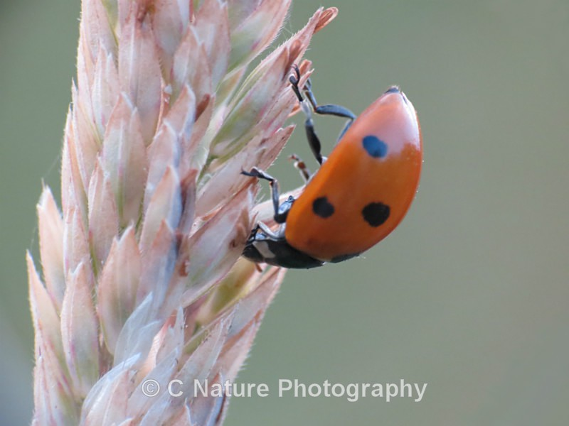 Hanging Around - Insects & Creepy Crawlies