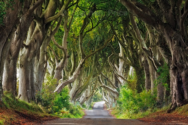Dark Hedges | Northern Ireland Photography Locations