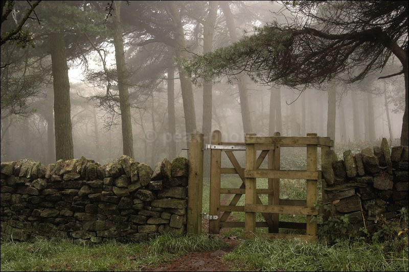 Gate to Blacka Moor - Photographs of Woodland & Rivers