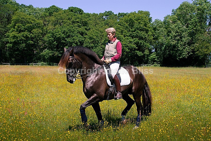 Kyra Kyrklund - Dressage Rider Portraits