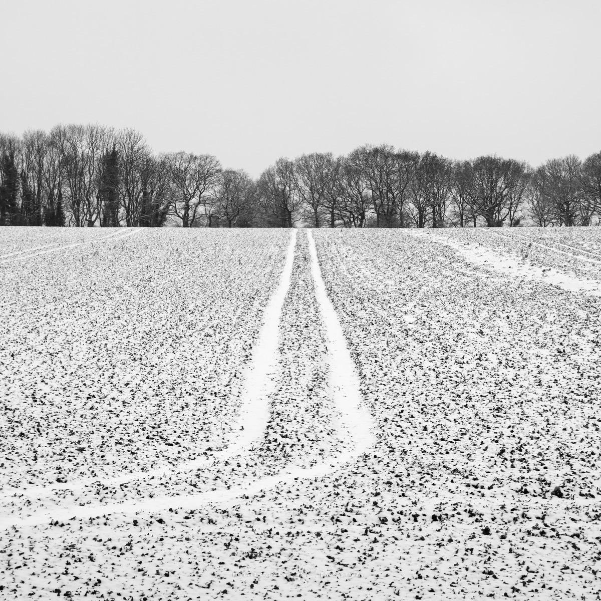 Dusted field - WINTER