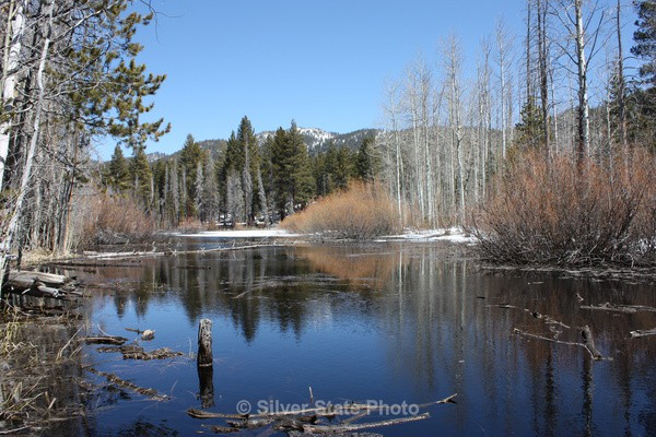 Pond near Lake Tahoe - Nevada (mostly) Landscapes