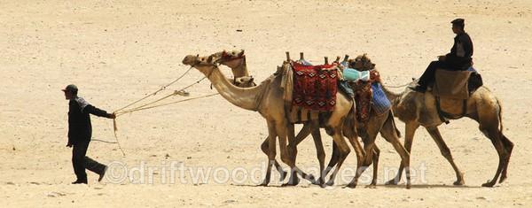Egyptian Sahara - Egypt