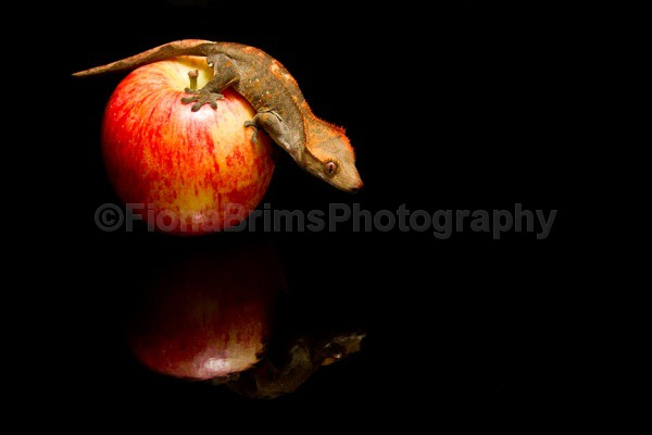 blob and dinner - Reptile Photography