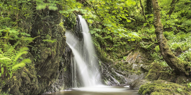 Woodland Cascade - Aberfforest - Images from book