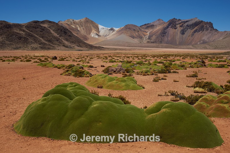 Cushion Plants on the Altiplano - Altiplano of North-East Chile