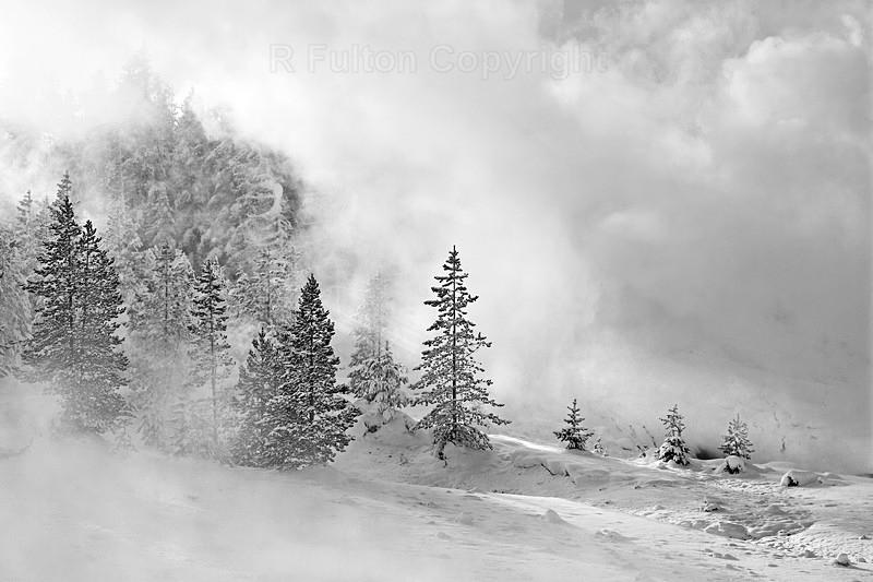 Tree Mist - Yellowstone