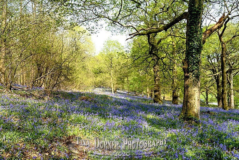 - Spring & Summer in The Forest of Dean & Wye Valley and BLUEBELLS!