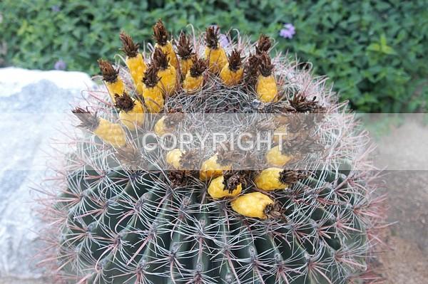 Cactus - DSC-0280 - The Flower Shop