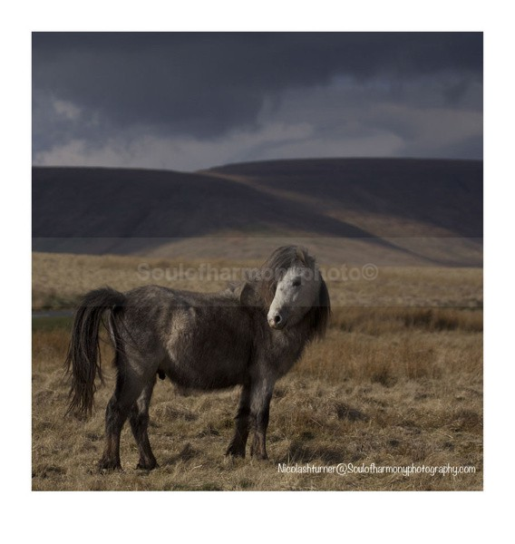 Welsh  Mountain & Moorlands - Wildlife Wildlife