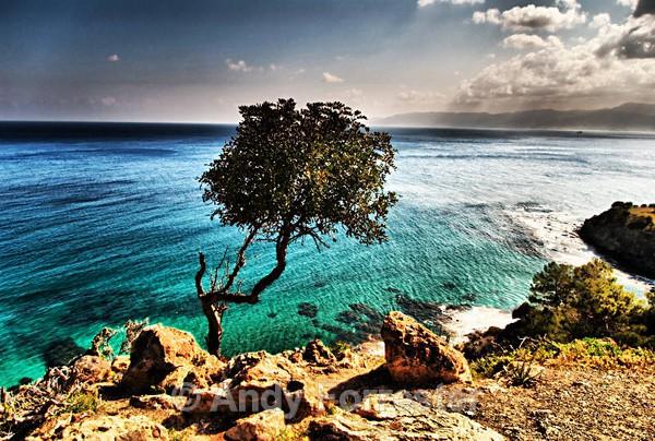 The Tree - Cyprus 2008